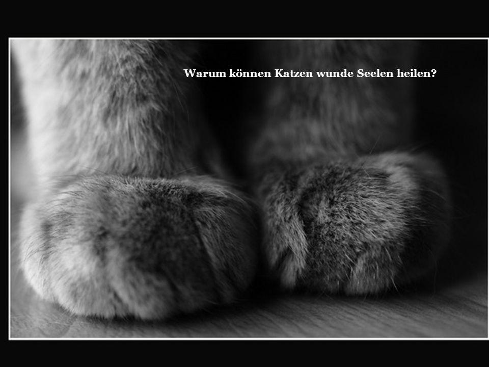 Warum können Katzen wunde Seelen heilen?