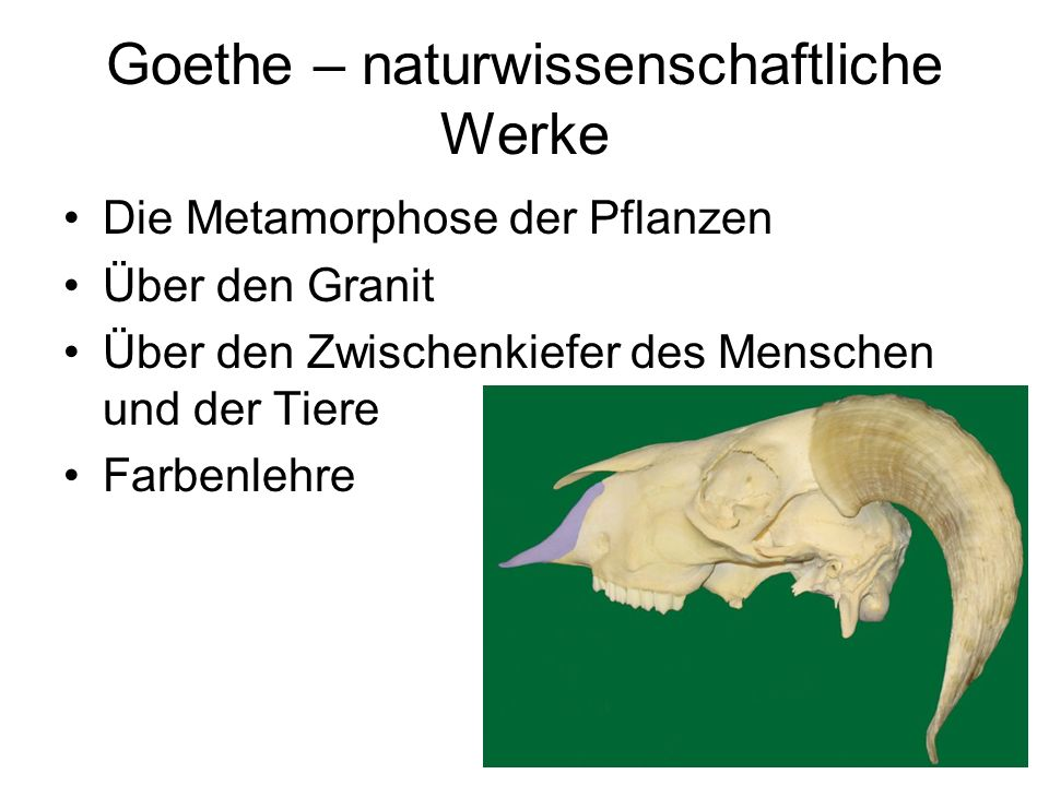 Goethe – naturwissenschaftliche Werke Die Metamorphose der Pflanzen Über den Granit Über den Zwischenkiefer des Menschen und der Tiere Farbenlehre