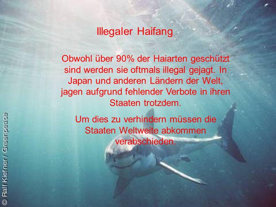 Illegaler Haifang Obwohl über 90% der Haiarten geschützt sind werden sie oftmals illegal gejagt. In Japan und anderen Ländern der Welt, jagen aufgrund