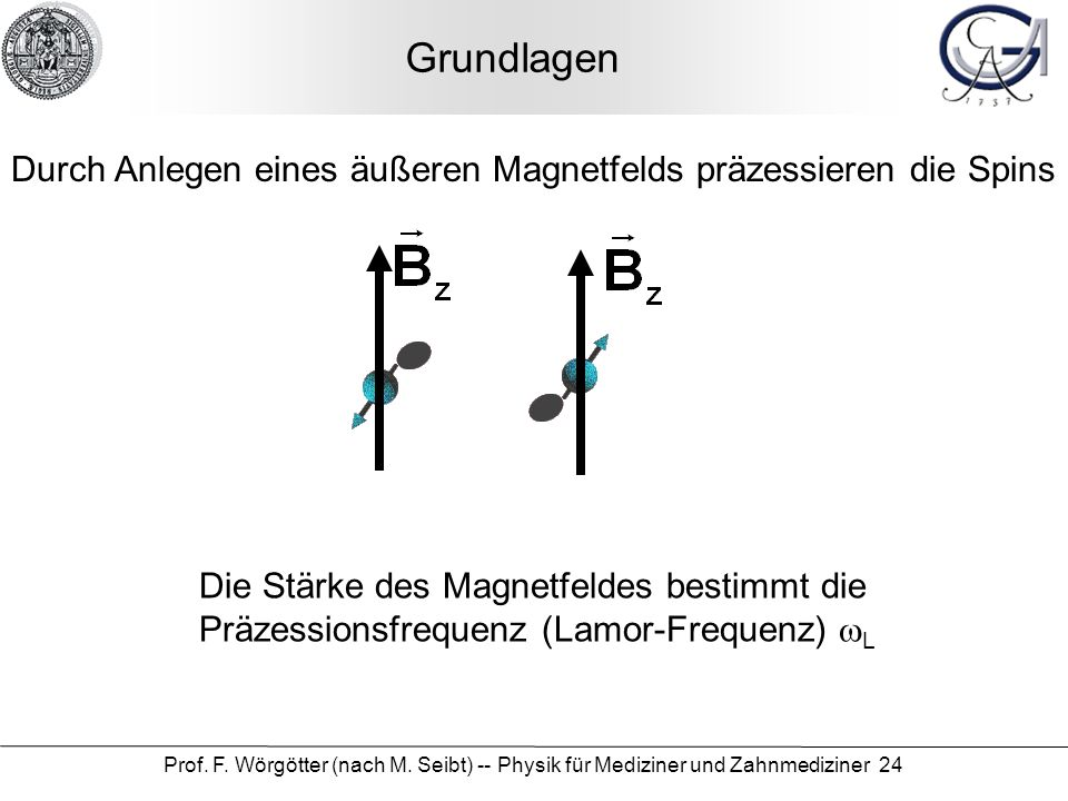 Prof. F. Wörgötter (nach M. Seibt) -- Physik für Mediziner und Zahnmediziner 24 Grundlagen Durch Anlegen eines äußeren Magnetfelds präzessieren die Sp