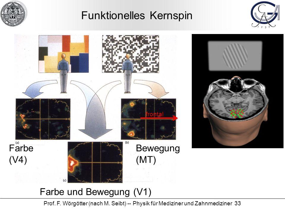 Prof. F. Wörgötter (nach M. Seibt) -- Physik für Mediziner und Zahnmediziner 33 Funktionelles Kernspin Farbe (V4) Bewegung (MT) Farbe und Bewegung (V1