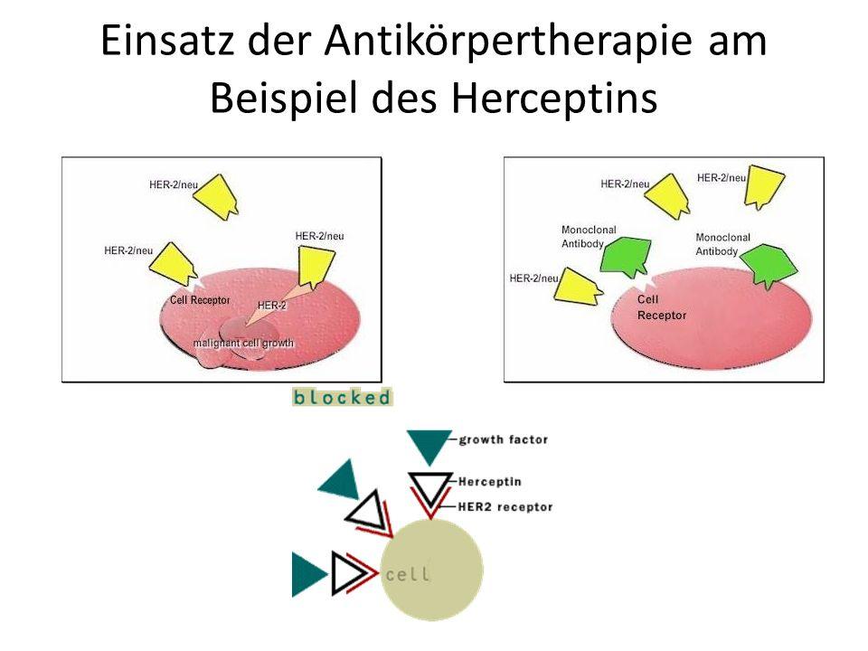 Einsatz der Antikörpertherapie am Beispiel des Herceptins