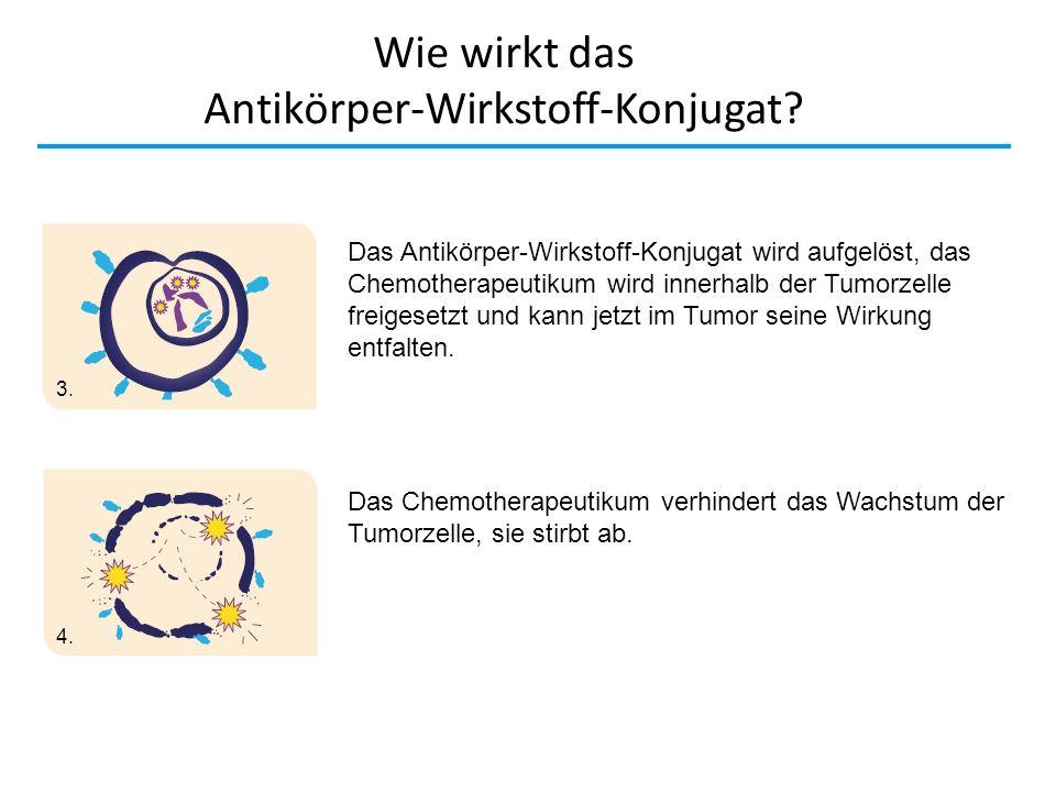 Wie wirkt das Antikörper-Wirkstoff-Konjugat? Zytostatikum Das Antikörper-Wirkstoff-Konjugat wird aufgelöst, das Chemotherapeutikum wird innerhalb der