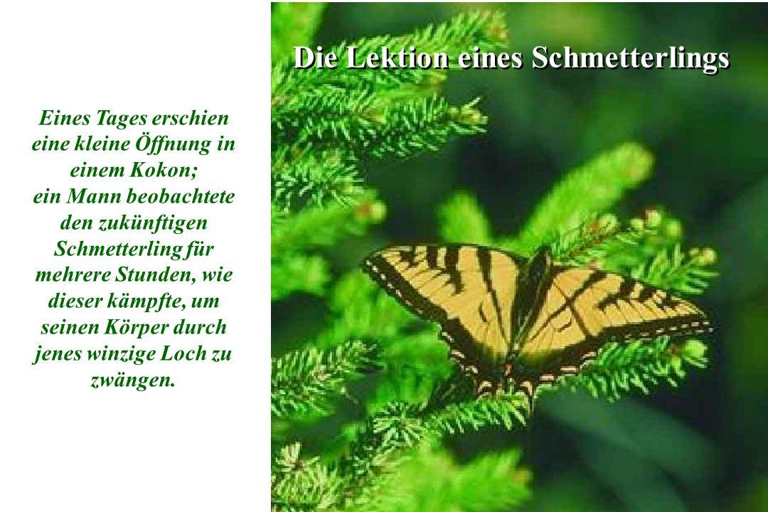 1 1 Die Lektion eines Schmetterlings Eines Tages erschien eine kleine Öffnung in einem Kokon; ein Mann beobachtete den zukünftigen Schmetterling für mehrere Stunden, wie dieser kämpfte, um seinen Körper durch jenes winzige Loch zu zwängen.