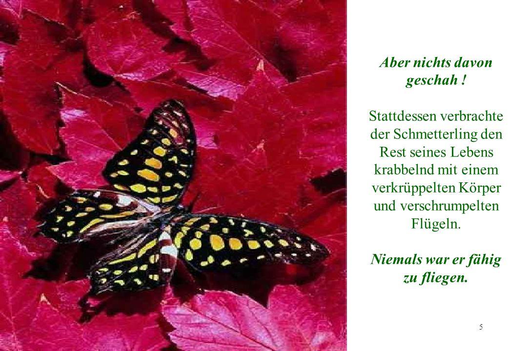 5 5 Aber nichts davon geschah ! Stattdessen verbrachte der Schmetterling den Rest seines Lebens krabbelnd mit einem verkrüppelten Körper und verschrum