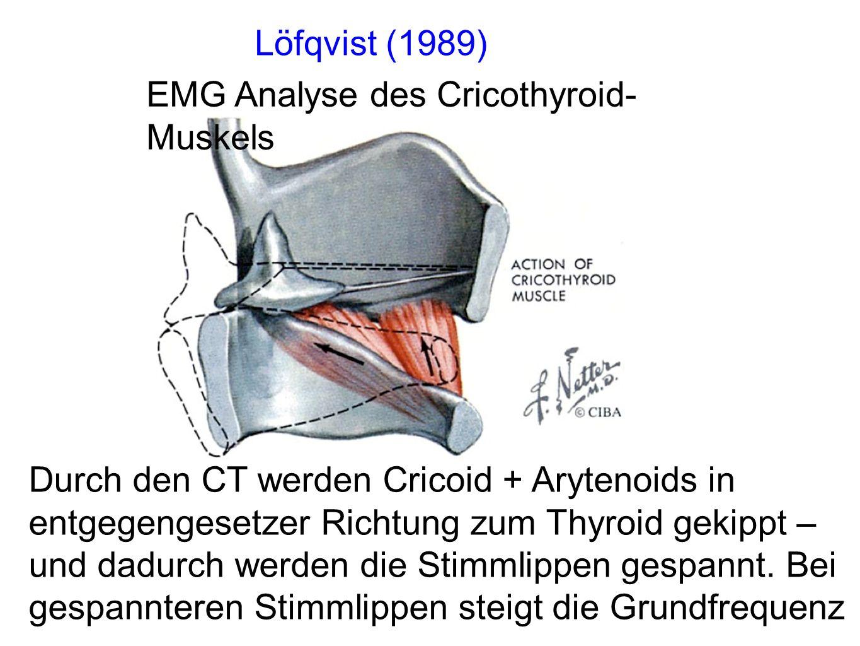 Durch den CT werden Cricoid + Arytenoids in entgegengesetzer Richtung zum Thyroid gekippt – und dadurch werden die Stimmlippen gespannt.