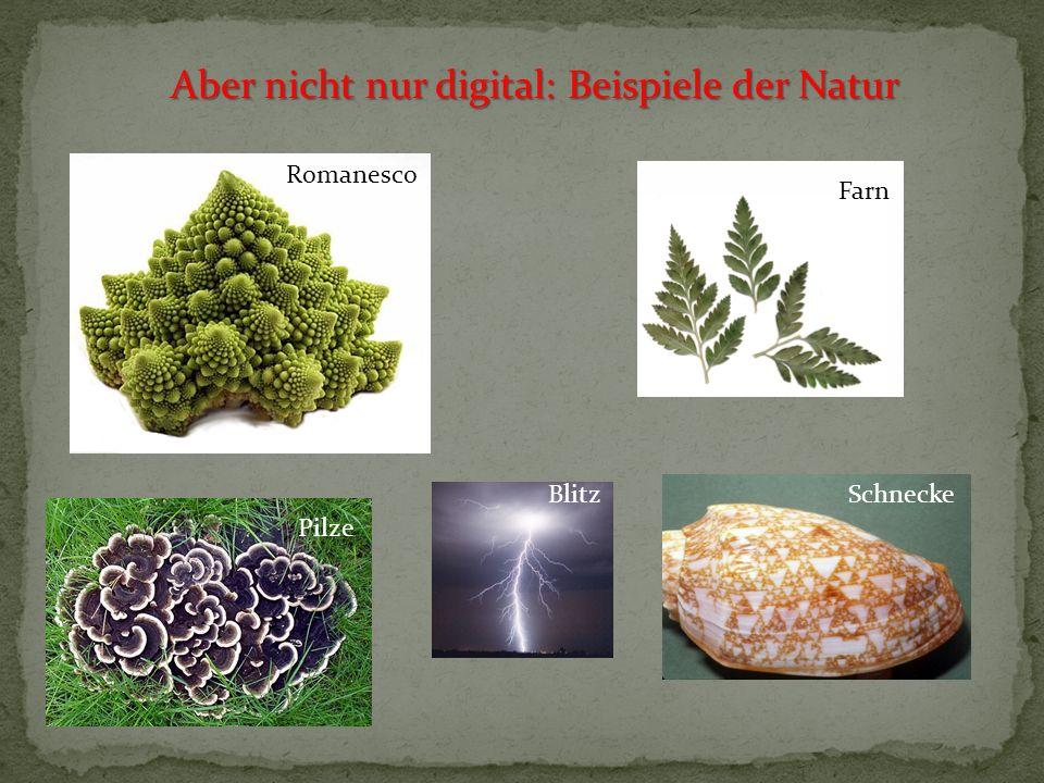 Aber nicht nur digital: Beispiele der Natur Romanesco Farn SchneckeBlitz Pilze