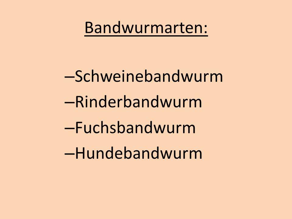 Bandwurmarten: – Schweinebandwurm – Rinderbandwurm – Fuchsbandwurm – Hundebandwurm