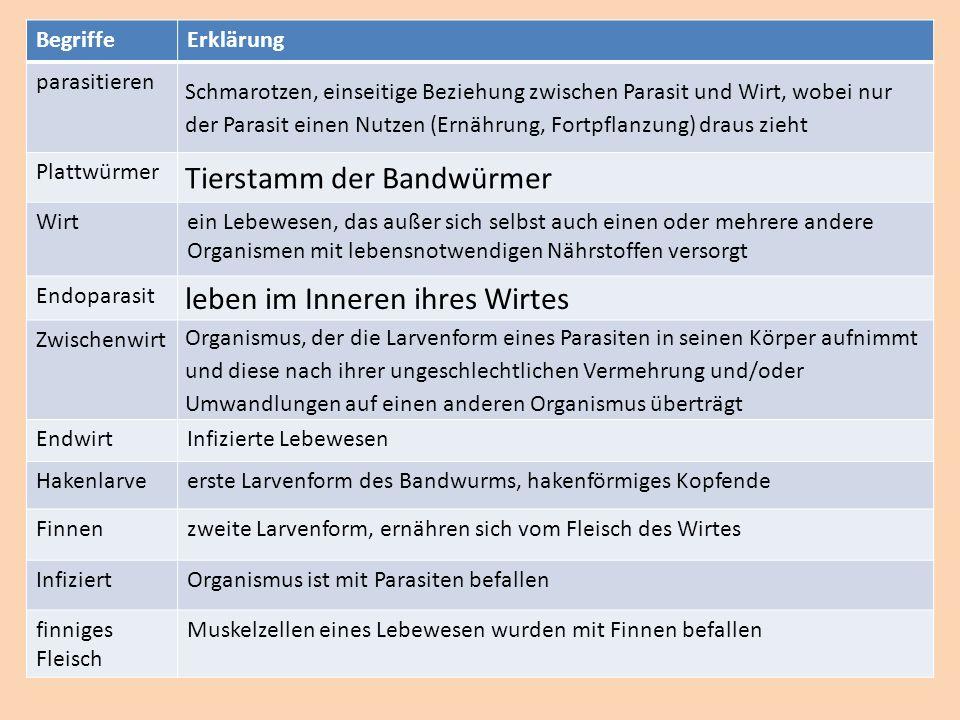 BegriffeErklärung parasitieren Schmarotzen, einseitige Beziehung zwischen Parasit und Wirt, wobei nur der Parasit einen Nutzen (Ernährung, Fortpflanzu