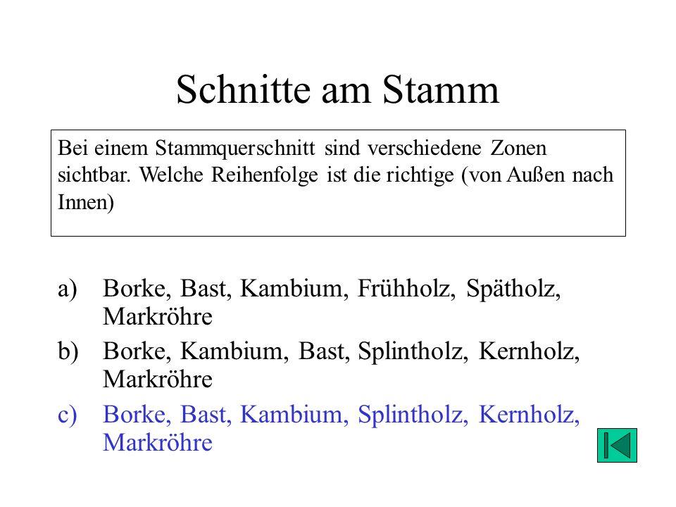 Schnitte am Stamm a)Borke, Bast, Kambium, Frühholz, Spätholz, Markröhre b)Borke, Kambium, Bast, Splintholz, Kernholz, Markröhre c)Borke, Bast, Kambium