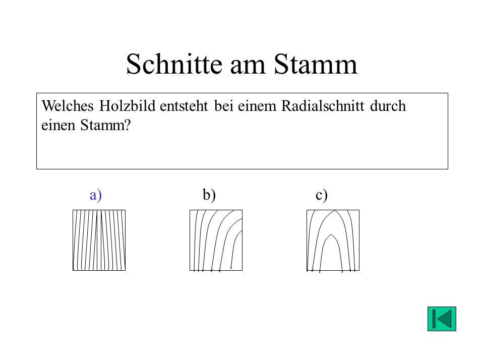 Schnitte am Stamm Welches Holzbild entsteht bei einem Radialschnitt durch einen Stamm? a)c)b) Lösung