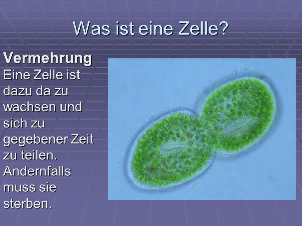 Was ist eine Zelle.