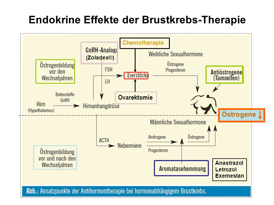 Endokrine Effekte der Brustkrebs-Therapie (Zoladex®) Anastrazol Letrozol Exemestan Ovarektomie Chemotherapie Östrogene