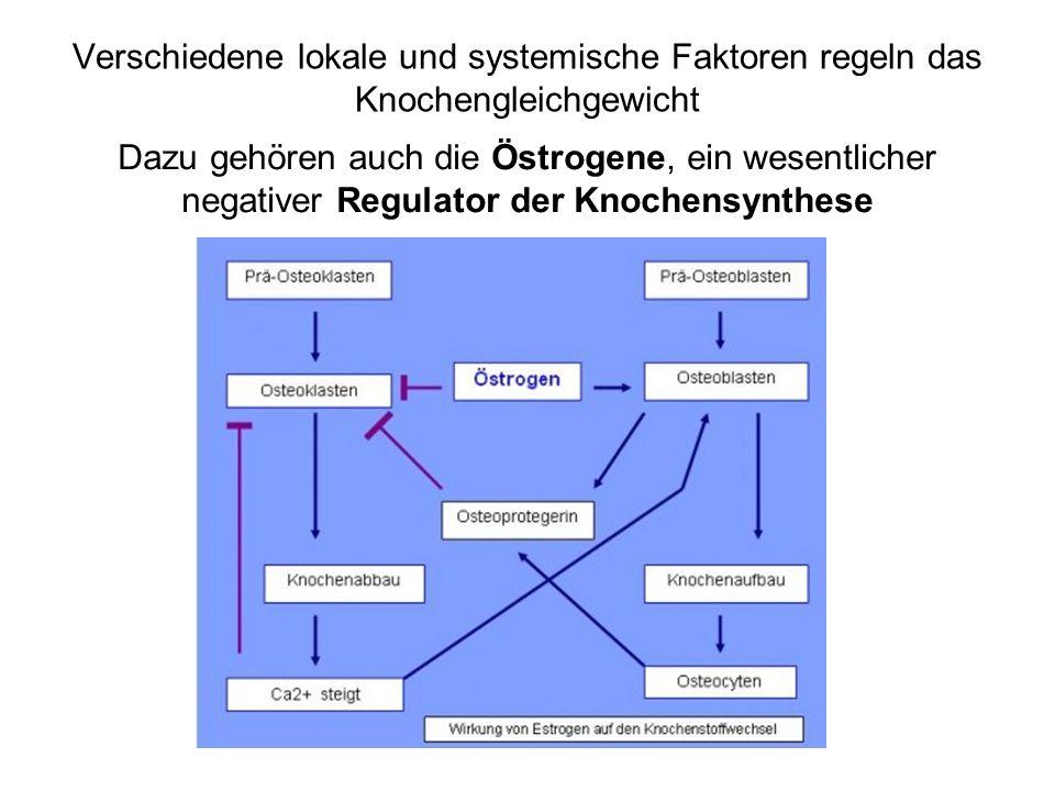 Verschiedene lokale und systemische Faktoren regeln das Knochengleichgewicht Dazu gehören auch die Östrogene, ein wesentlicher negativer Regulator der