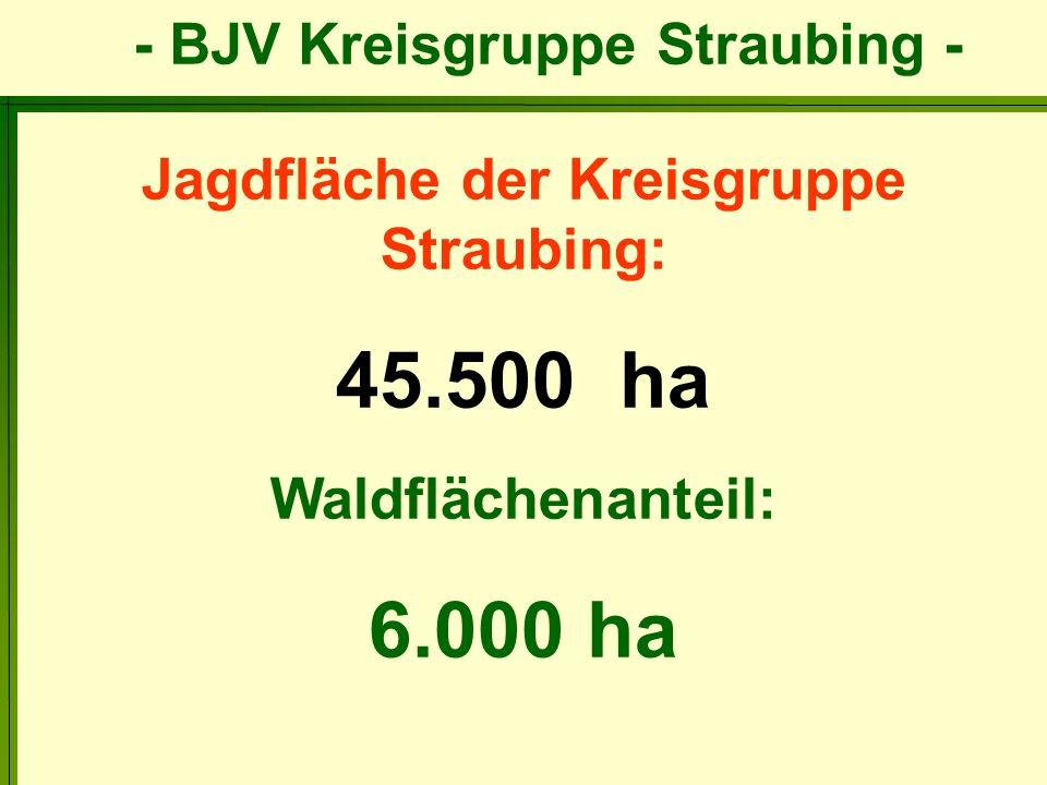 - BJV Kreisgruppe Straubing - Altersaufbau des Rehwildbestandes Anzahl der Gehörne: 422 Ist: 35 % 47 % 18 % Richtlinie: 50 % 20 % 30 % 1-jährig 2-4 jährig 5-jährig