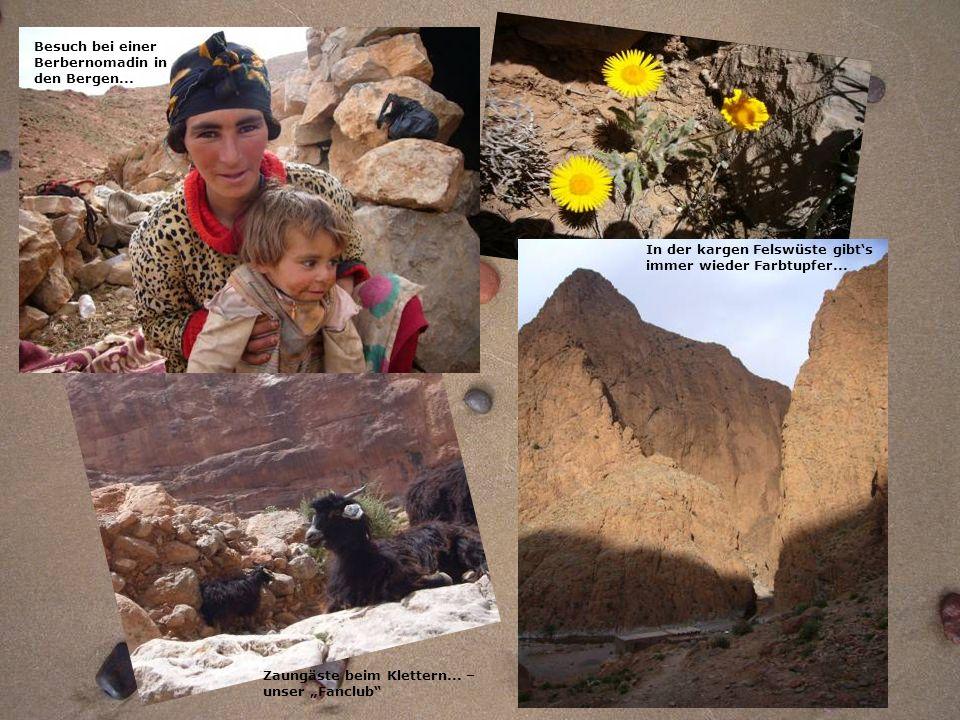 Zaungäste beim Klettern... – unser Fanclub Besuch bei einer Berbernomadin in den Bergen... In der kargen Felswüste gibts immer wieder Farbtupfer...