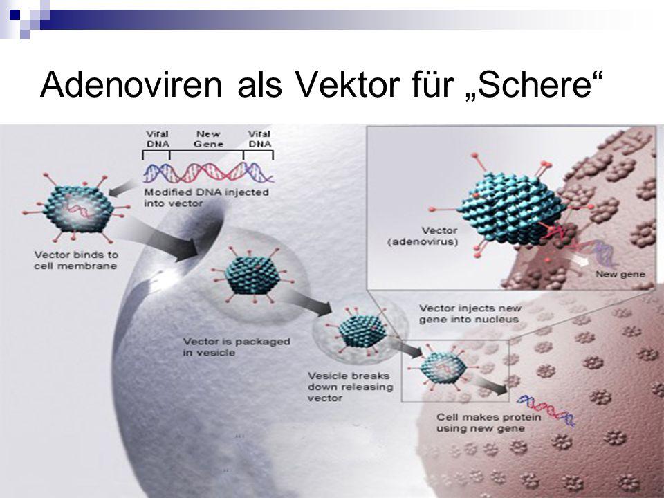Adenoviren als Vektor für Schere