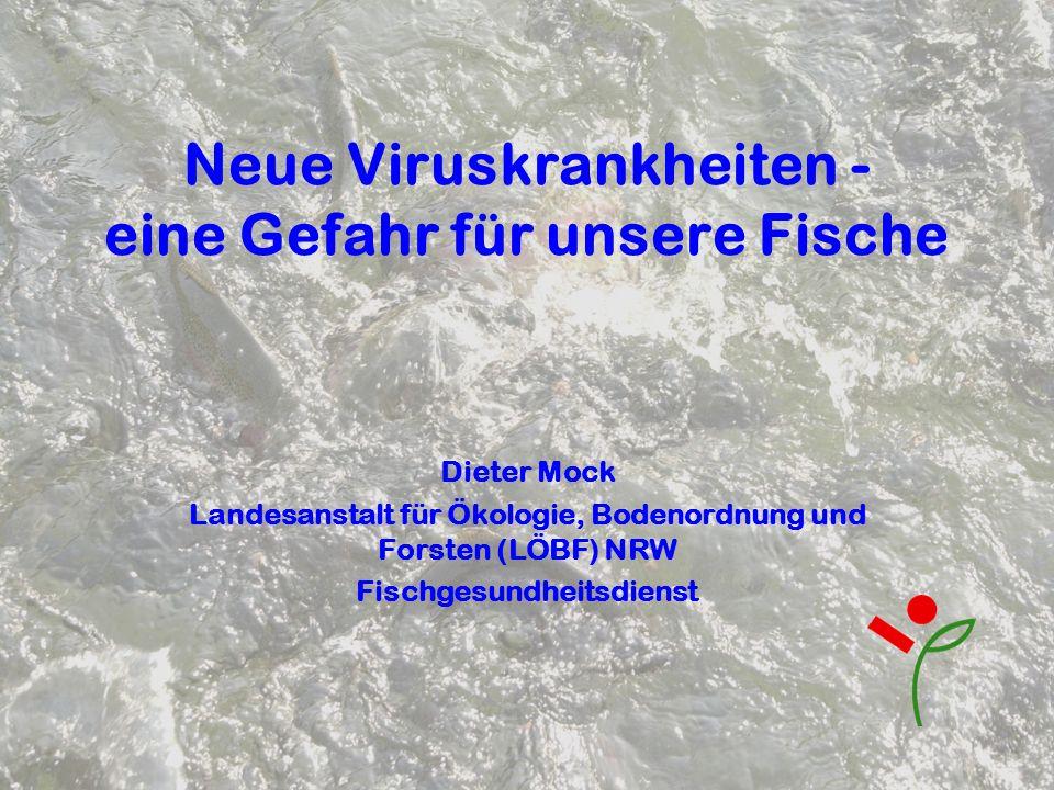 Neue Viruskrankheiten - eine Gefahr für unsere Fische Dieter Mock Landesanstalt für Ökologie, Bodenordnung und Forsten (LÖBF) NRW Fischgesundheitsdien
