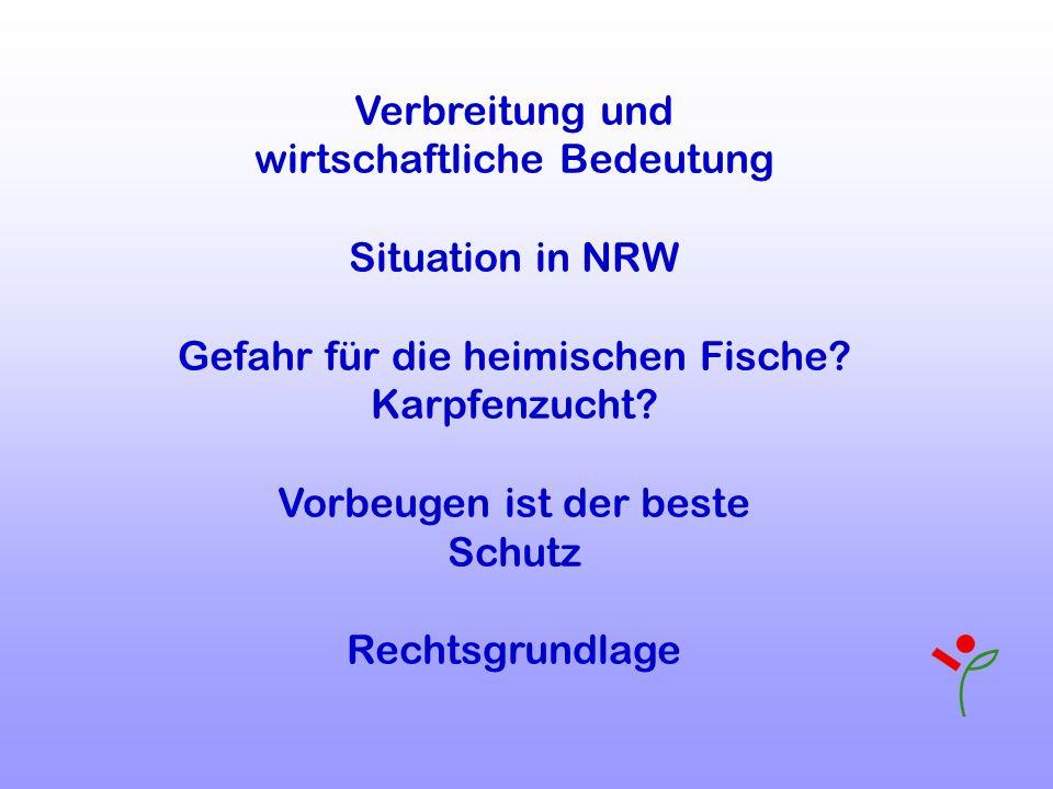 Verbreitung und wirtschaftliche Bedeutung Situation in NRW Gefahr für die heimischen Fische? Karpfenzucht? Vorbeugen ist der beste Schutz Rechtsgrundl