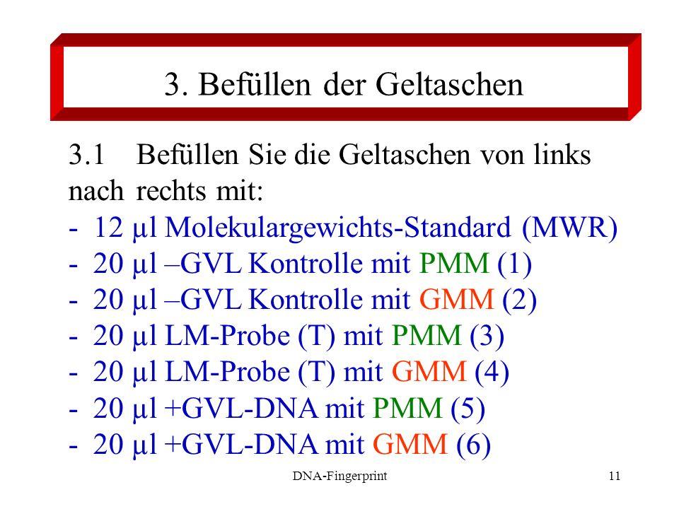 DNA-Fingerprint11 3. Befüllen der Geltaschen 3.1Befüllen Sie die Geltaschen von links nach rechts mit: - 12 µl Molekulargewichts-Standard (MWR) - 20 µ