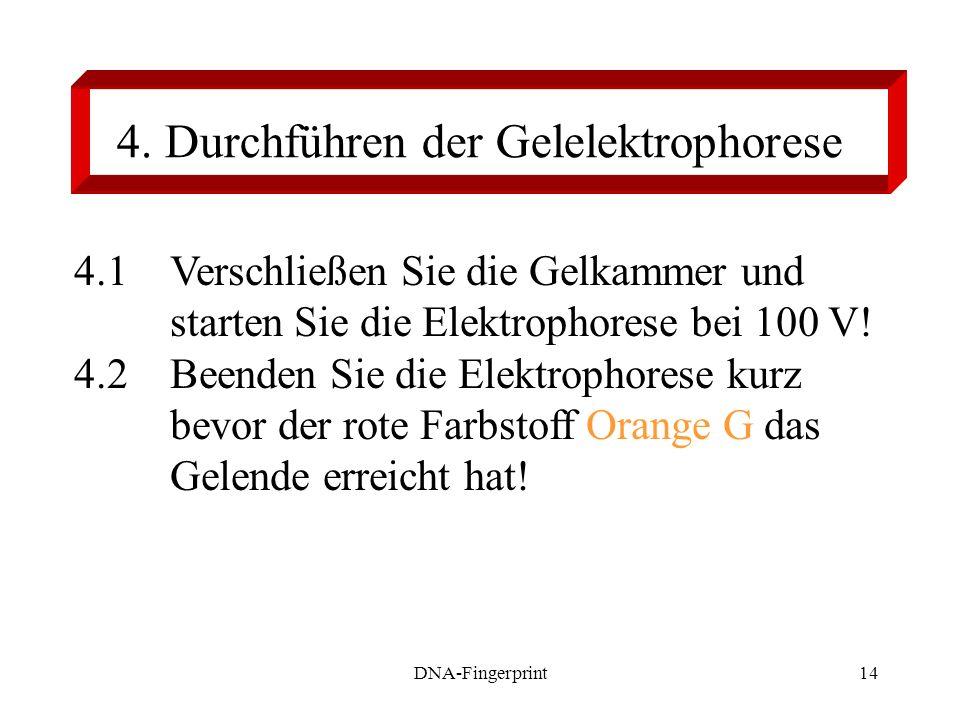 DNA-Fingerprint14 4. Durchführen der Gelelektrophorese 4.1 Verschließen Sie die Gelkammer und starten Sie die Elektrophorese bei 100 V! 4.2 Beenden Si