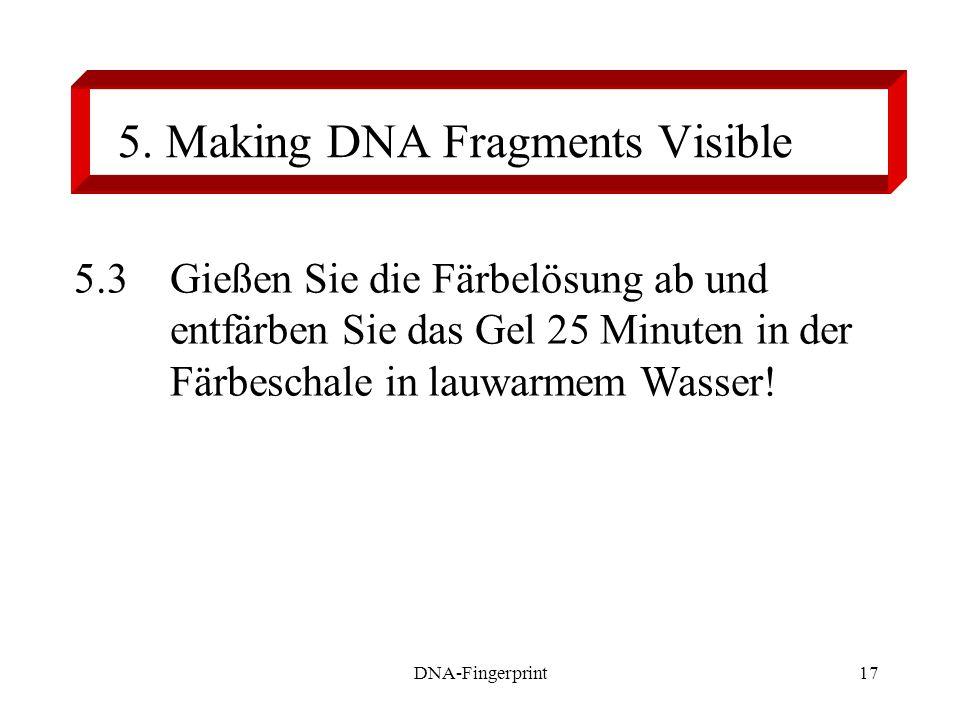 DNA-Fingerprint17 5.3Gießen Sie die Färbelösung ab und entfärben Sie das Gel 25 Minuten in der Färbeschale in lauwarmem Wasser! 5. Making DNA Fragment