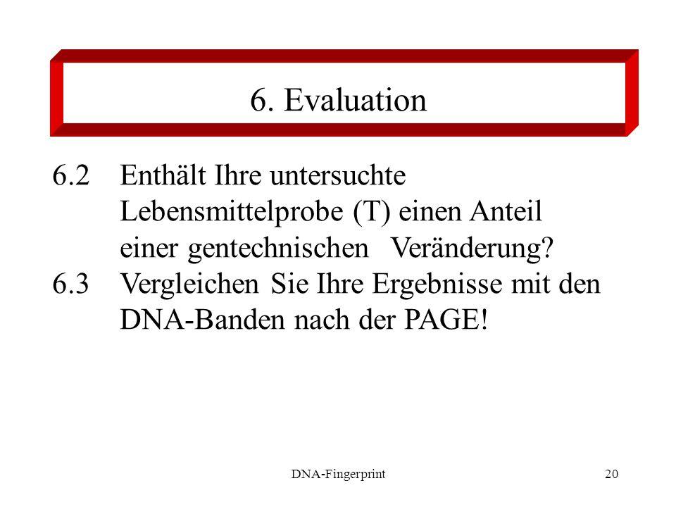 DNA-Fingerprint20 6.2Enthält Ihre untersuchte Lebensmittelprobe (T) einen Anteil einer gentechnischen Veränderung? 6.3Vergleichen Sie Ihre Ergebnisse