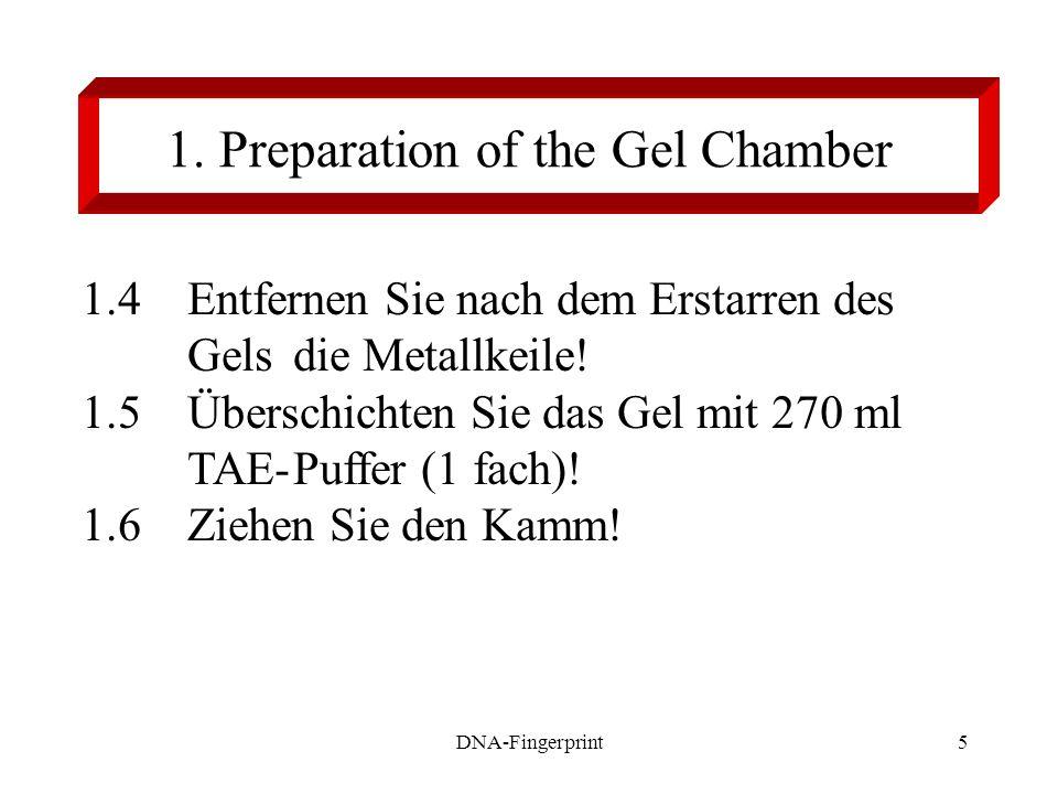5 1.4Entfernen Sie nach dem Erstarren des Gels die Metallkeile! 1.5Überschichten Sie das Gel mit 270 ml TAE-Puffer (1 fach)! 1.6Ziehen Sie den Kamm! 1