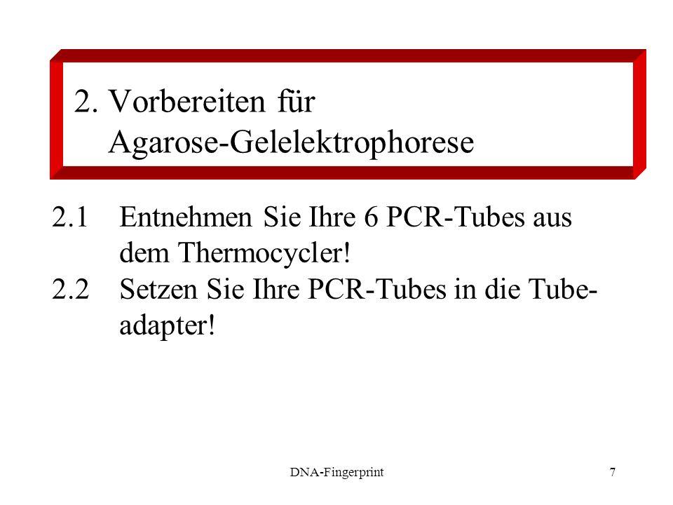 DNA-Fingerprint7 2. Vorbereiten für Agarose-Gelelektrophorese 2.1Entnehmen Sie Ihre 6 PCR-Tubes aus dem Thermocycler! 2.2Setzen Sie Ihre PCR-Tubes in