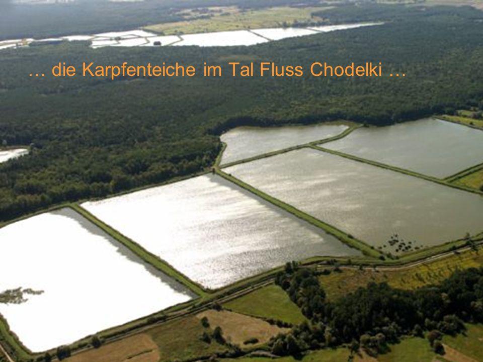 … die Karpfenteiche im Tal Fluss Chodelki …