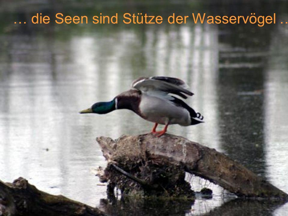 … die Seen sind Stütze der Wasservögel …