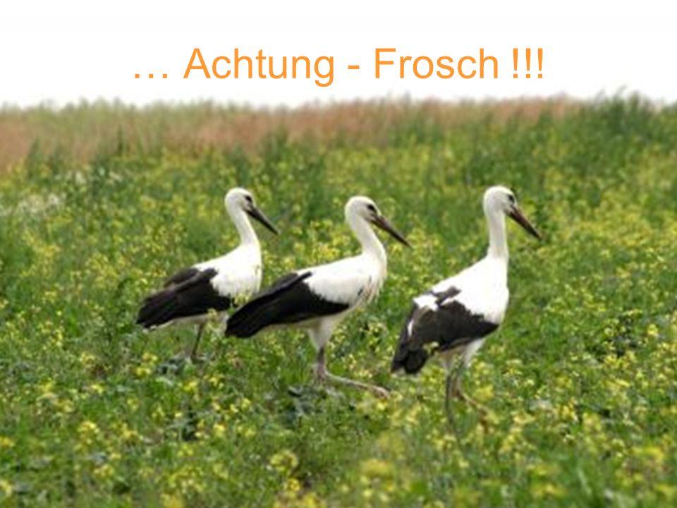 … Achtung - Frosch !!!