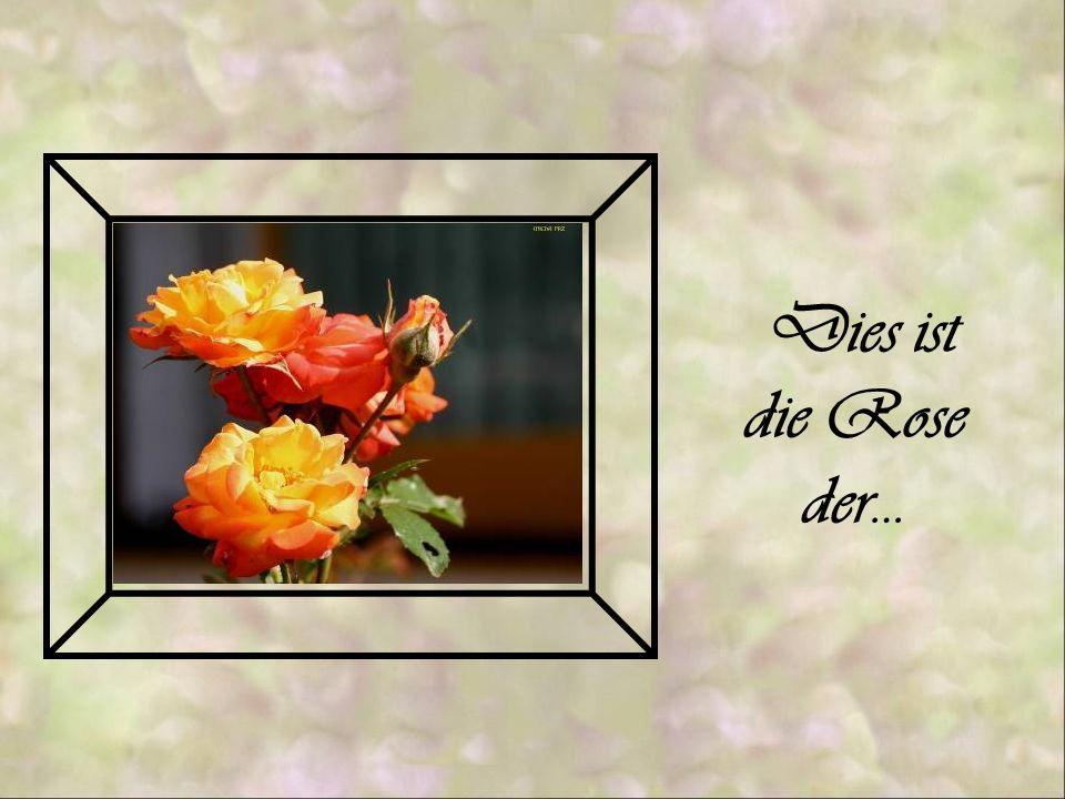 Dies ist die Rose der…