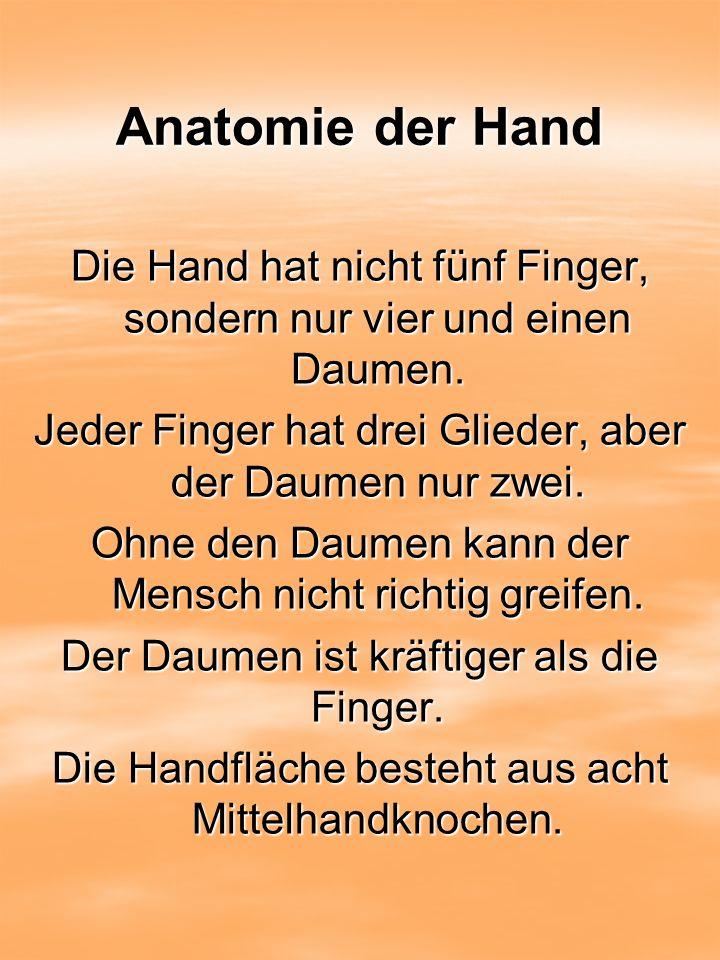 Anatomie der Hand Die Hand hat nicht fünf Finger, sondern nur vier und einen Daumen. Jeder Finger hat drei Glieder, aber der Daumen nur zwei. Ohne den