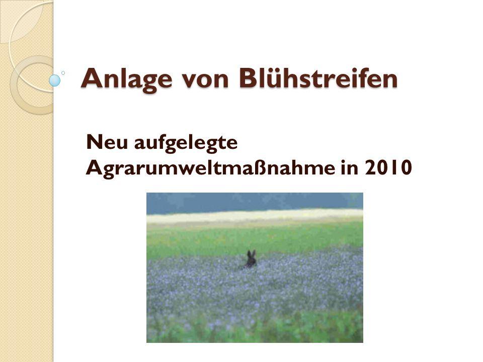 Anlage von Blühstreifen Neu aufgelegte Agrarumweltmaßnahme in 2010