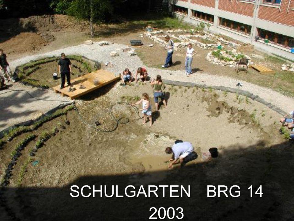 Die Geschichte: Bis 2002 war der Schulgarten der berühmte weiße Fleck auf der Landkarte, die SchülerInnen durften ihn nicht nutzen, & schon gar nicht gestalten.