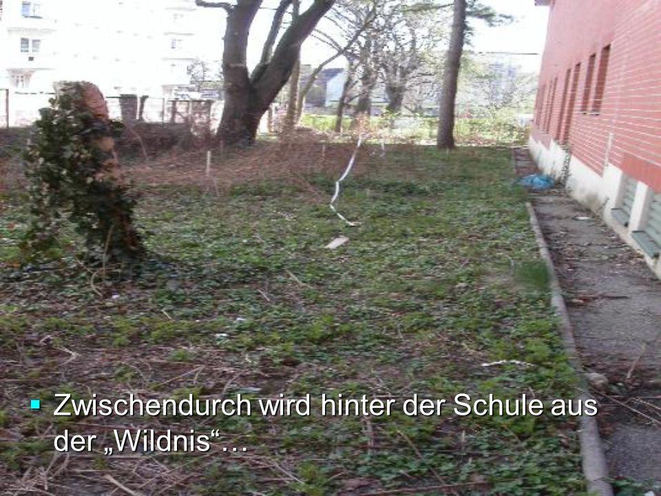 Zwischendurch wird hinter der Schule aus der Wildnis… Zwischendurch wird hinter der Schule aus der Wildnis…