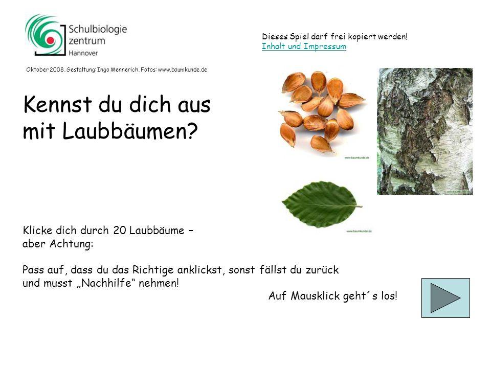 Was ist richtig? Fotos: www.baumkunde.de Platane? Ahorn? (Berg-Ahorn) Erle? (Schwarz-Erle) 11