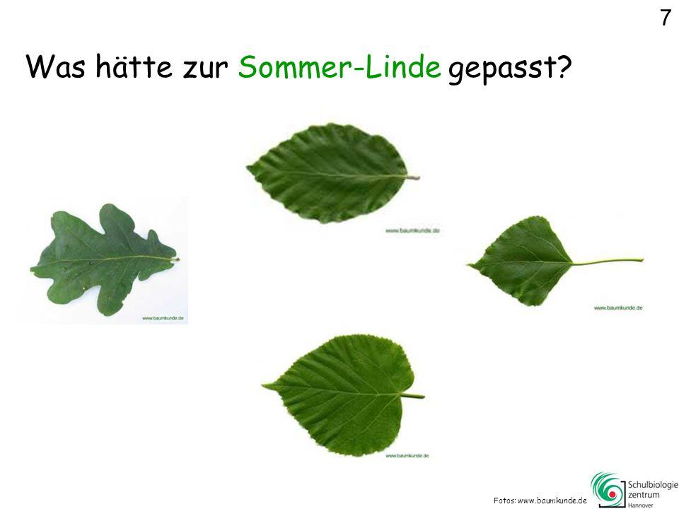 Was hätte zur Sommer-Linde gepasst? Fotos: www.baumkunde.de 7