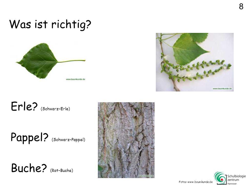 Was ist richtig.Fotos: www.baumkunde.de Erle. (Schwarz-Erle) Buche.