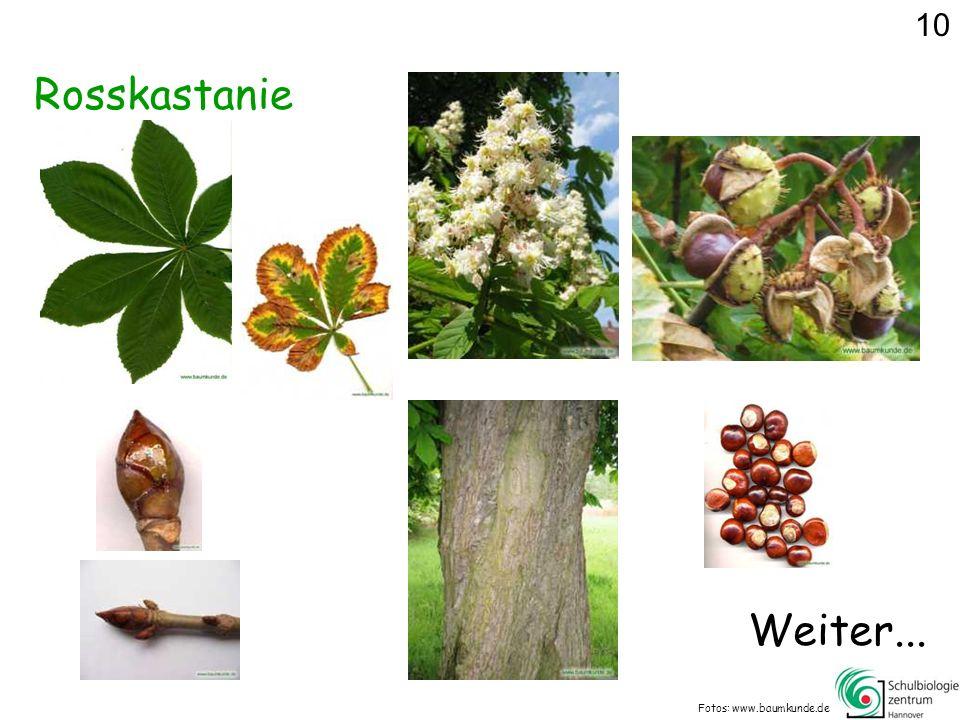 Rosskastanie Fotos: www.baumkunde.de Weiter... 10