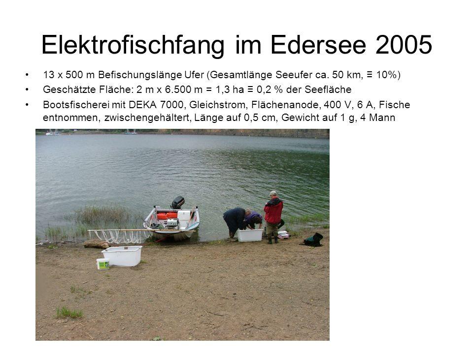 Elektrofischfang im Edersee 2005 13 x 500 m Befischungslänge Ufer (Gesamtlänge Seeufer ca. 50 km, 10%) Geschätzte Fläche: 2 m x 6.500 m = 1,3 ha 0,2 %
