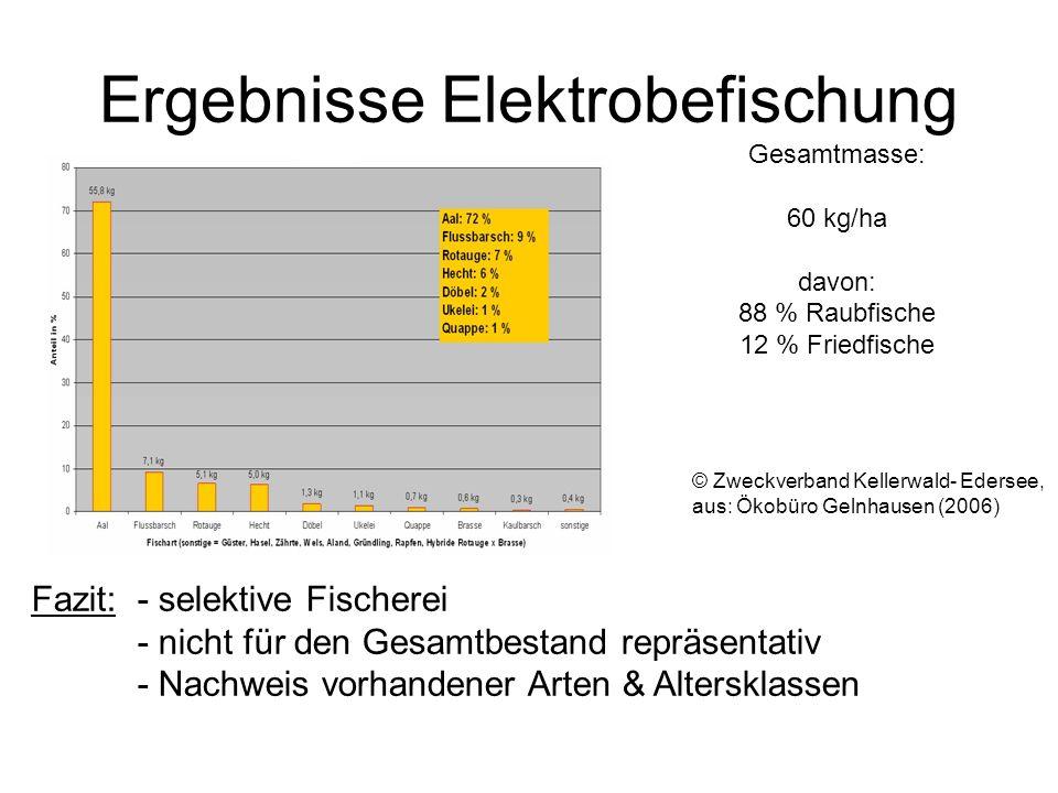Ergebnisse Elektrobefischung © Zweckverband Kellerwald- Edersee, aus: Ökobüro Gelnhausen (2006) Gesamtmasse: 60 kg/ha davon: 88 % Raubfische 12 % Frie