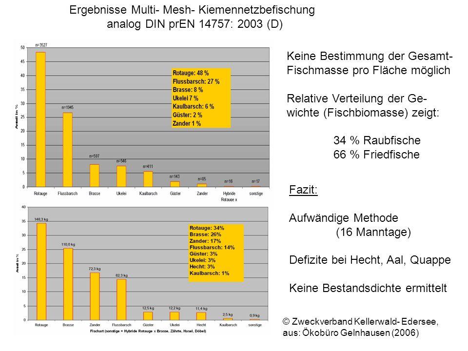 Ergebnisse Multi- Mesh- Kiemennetzbefischung analog DIN prEN 14757: 2003 (D) © Zweckverband Kellerwald- Edersee, aus: Ökobüro Gelnhausen (2006) Keine