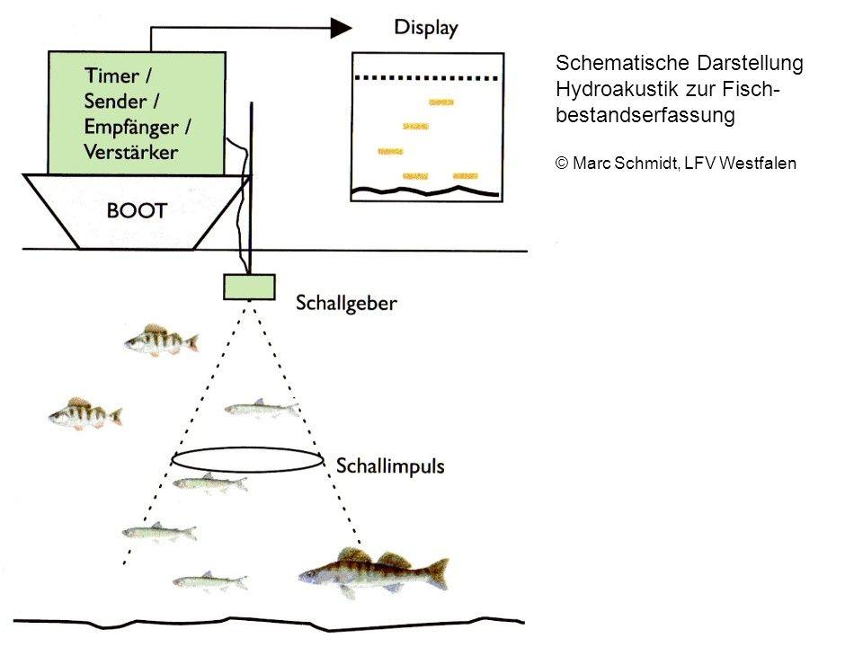 Schematische Darstellung Hydroakustik zur Fisch- bestandserfassung © Marc Schmidt, LFV Westfalen