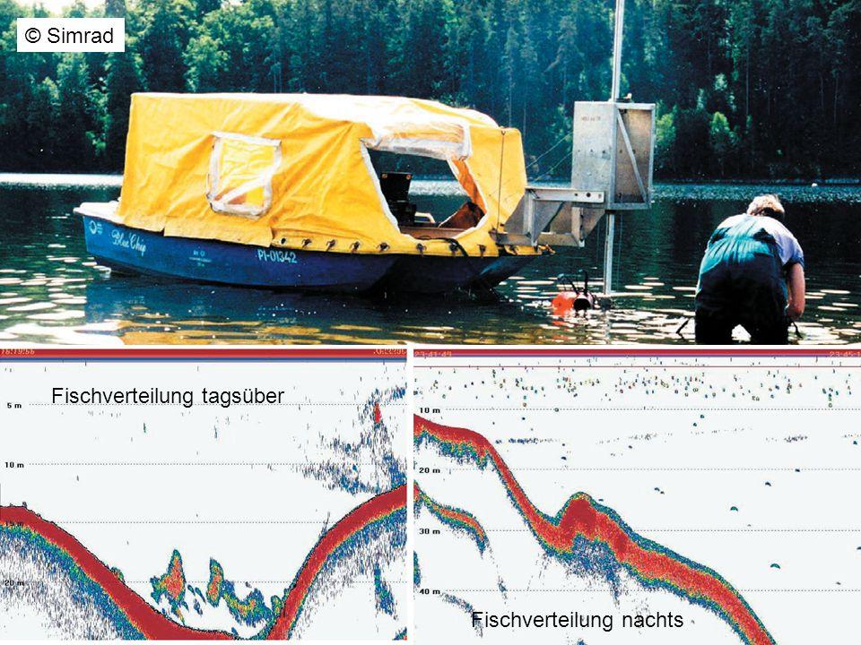 © Simrad Fischverteilung tagsüber Fischverteilung nachts