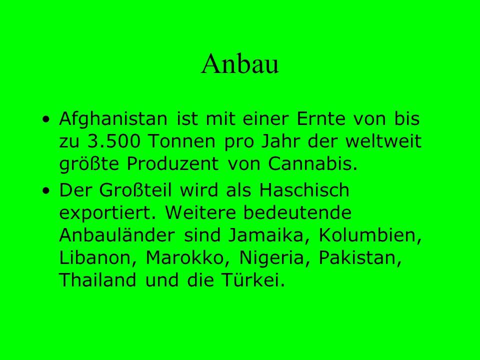 Anbau Afghanistan ist mit einer Ernte von bis zu 3.500 Tonnen pro Jahr der weltweit größte Produzent von Cannabis. Der Großteil wird als Haschisch exp