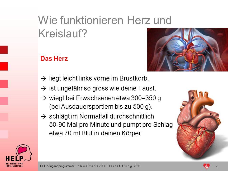 4 HELP-Jugendprogramm © S c h w e i z e r i s c h e H e r z s t i f t u n g 2013 Das Herz liegt leicht links vorne im Brustkorb. ist ungefähr so gross