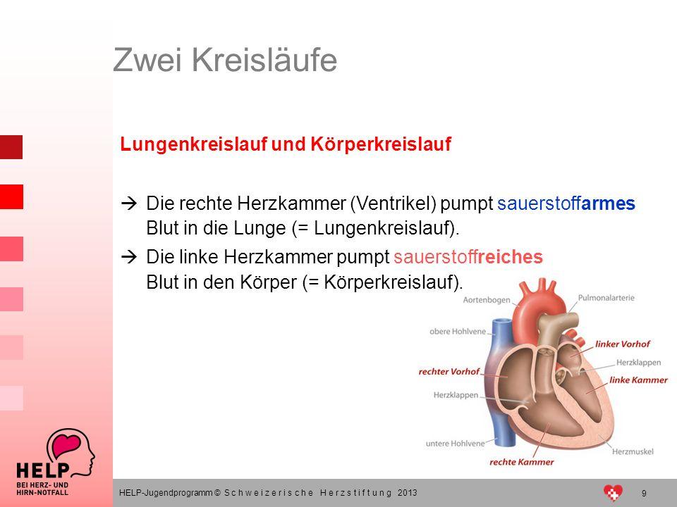 9 HELP-Jugendprogramm © S c h w e i z e r i s c h e H e r z s t i f t u n g 2013 Lungenkreislauf und Körperkreislauf Die rechte Herzkammer (Ventrikel)