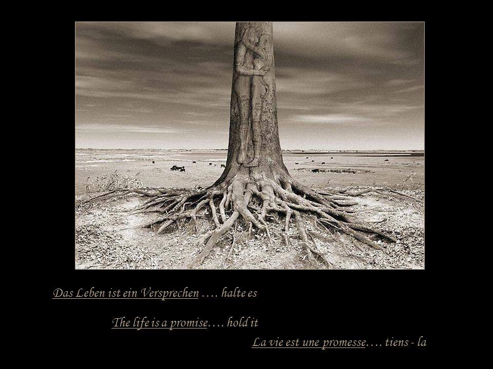 Das Leben ist eine Reise …..mache sie bis zu Ende La vie est un voyage.....